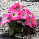 デイサービス花壇に春到来🌸